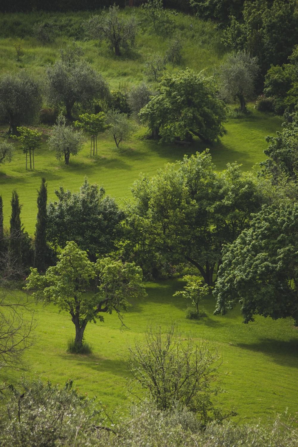 aerial photography of green field surrounded with green trees