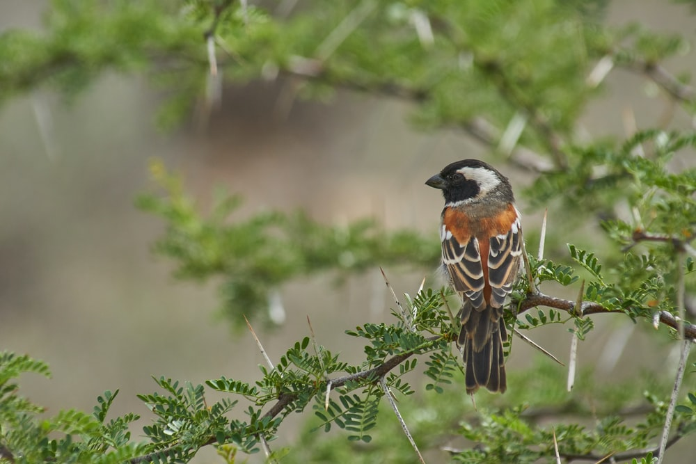 brown, gray, and black bird pearching on tree
