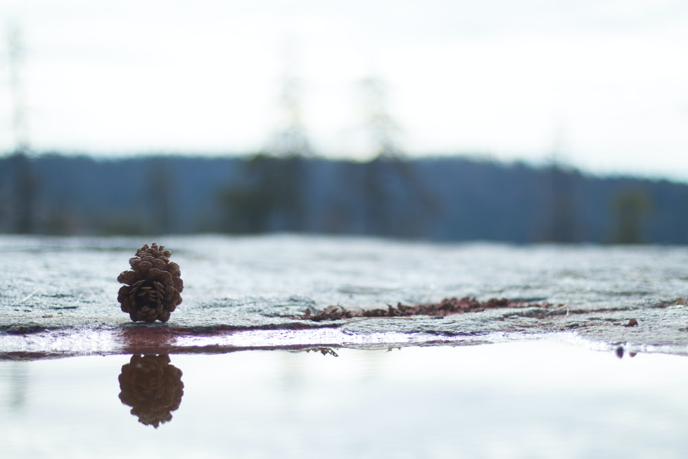 pine cone on the body of water