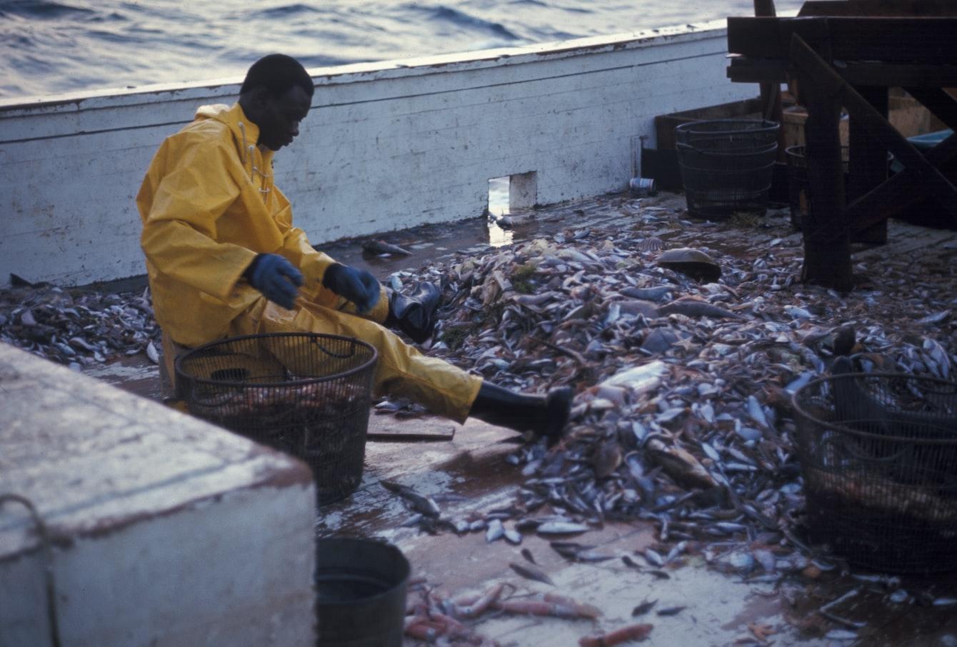 知道你盤中海產何處來嗎?拯救海洋,從吃對魚開始