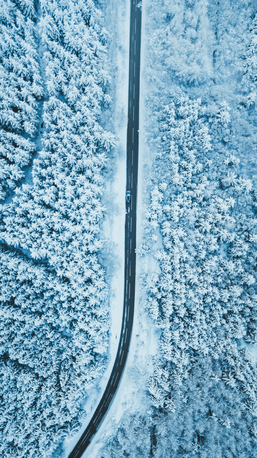 gray road surrounded by trees covered with snow