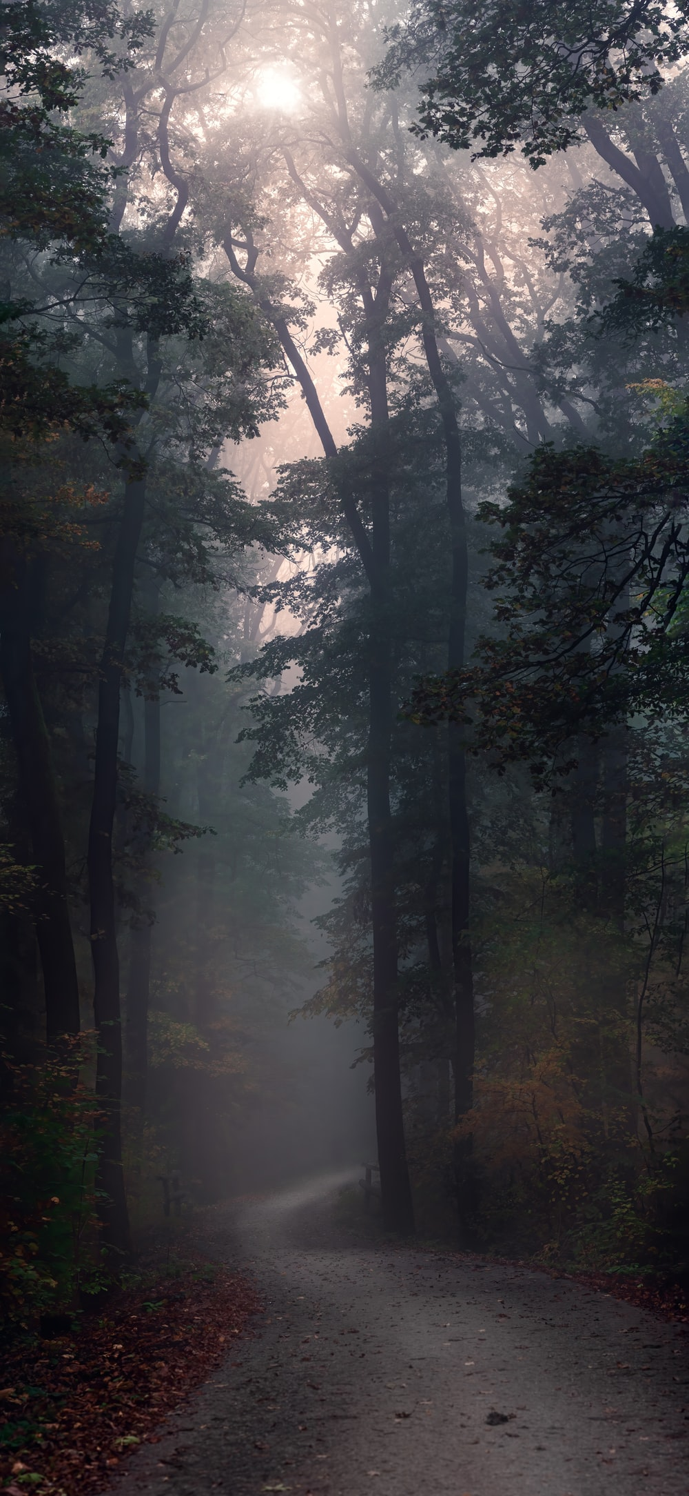 road surrounded with green trees in foggy day