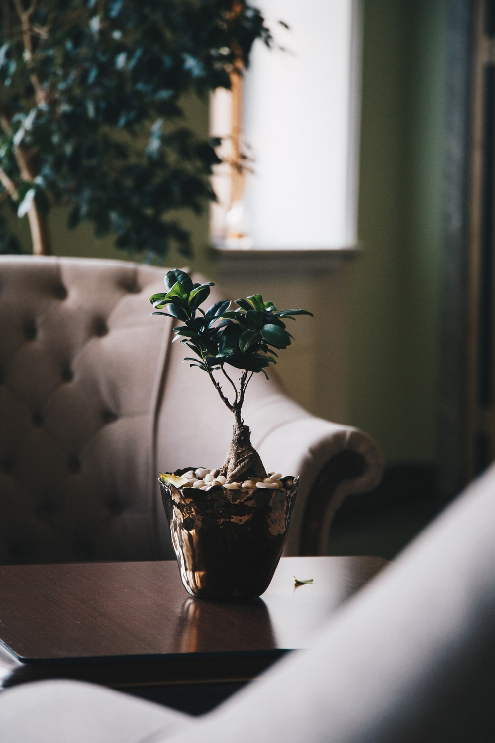 green leaf plant in pot on a table