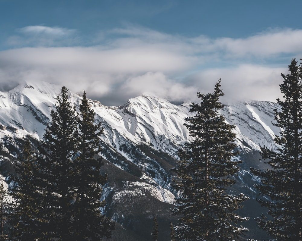trees and glacier mountain