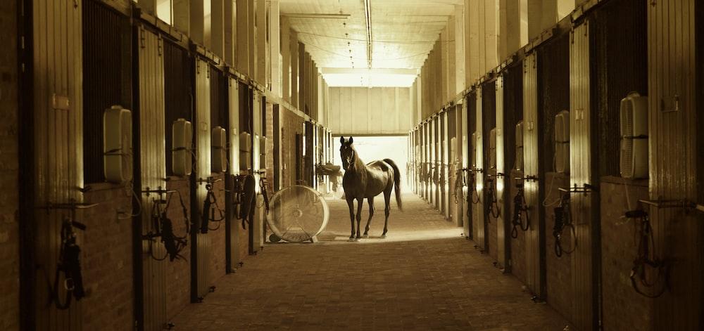 horse standing between stables