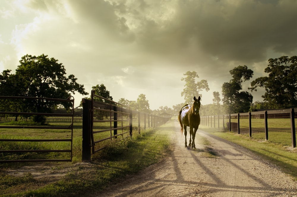 horse on dirt road by fences at daytime