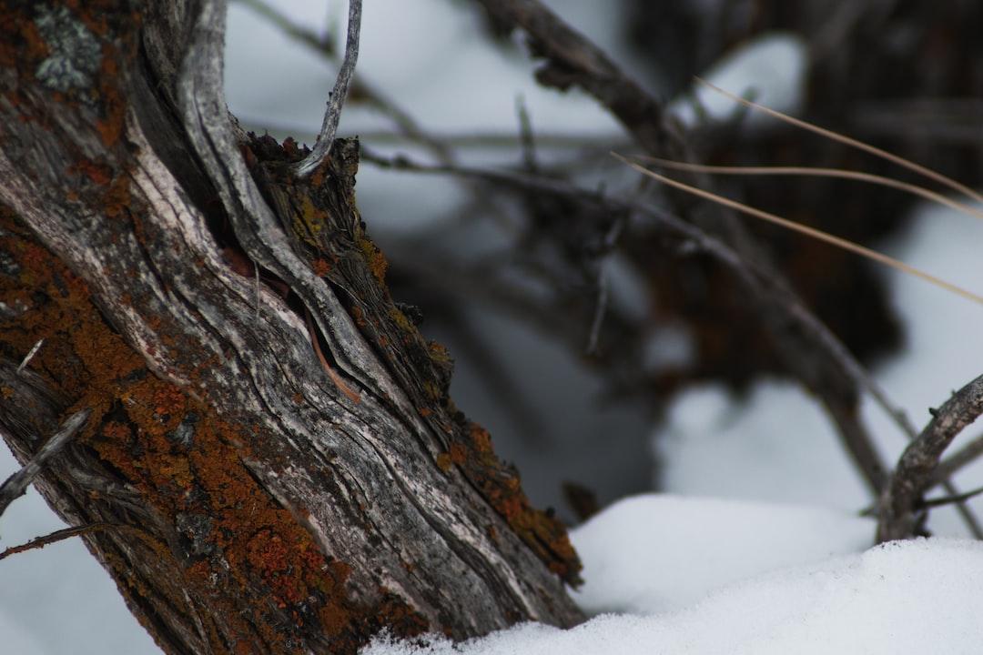 Cusick Creek Trail 12•18•19