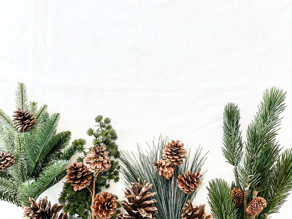 minimalist photography of brown pine cones