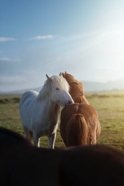 closeup photo of two horses during daytime