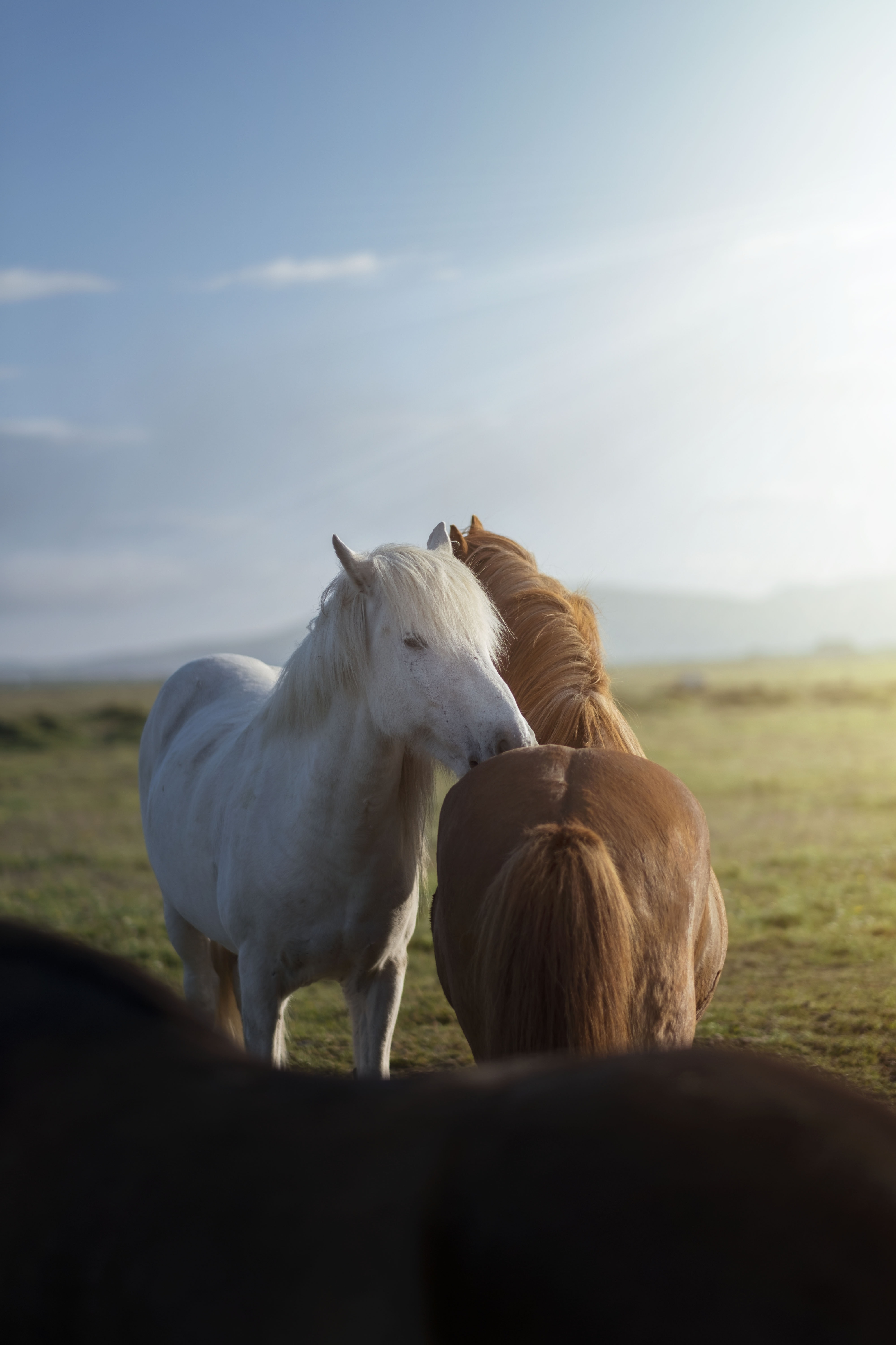 White Horse Pictures Download Free Images On Unsplash