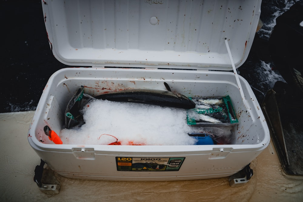 raw fishes in a white chest box