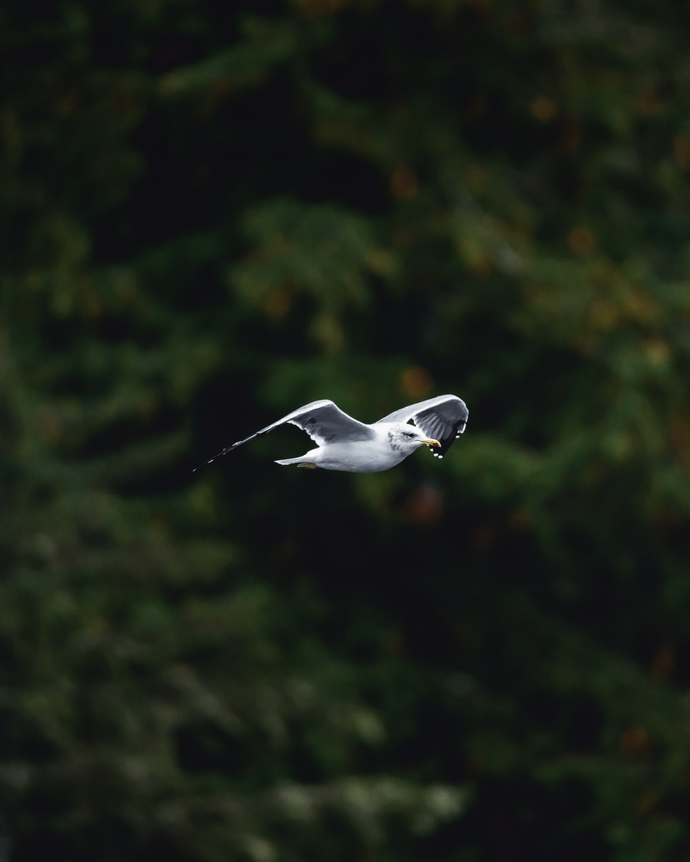 white and grey bird photograph