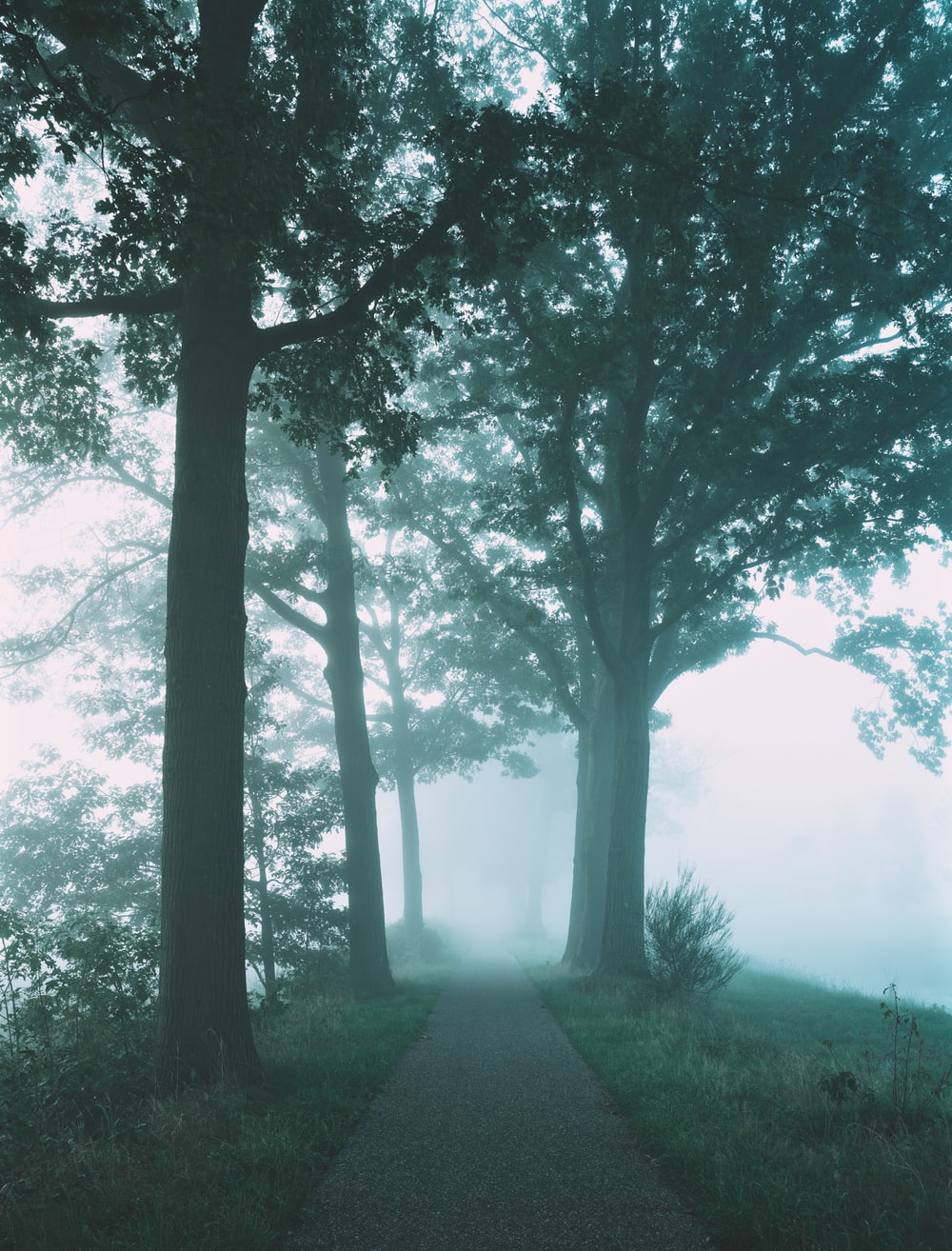 alley in between trees covered with fogs
