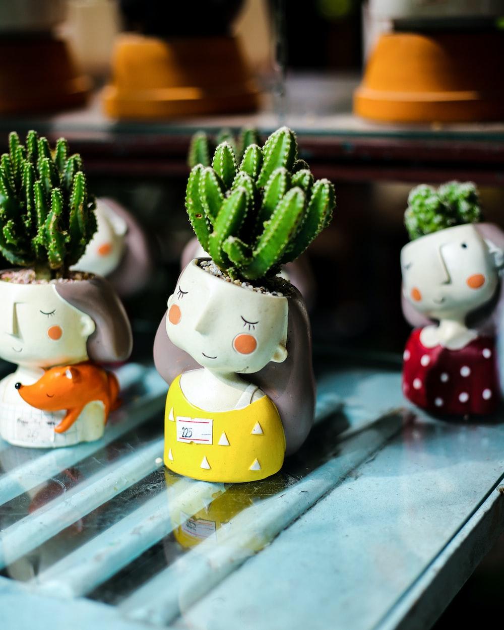 closeup photo of green cactus in pot
