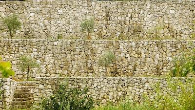 green plants blarney stone teams background