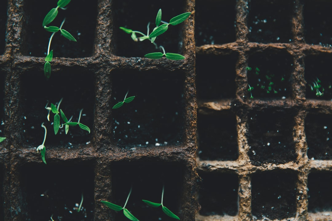 Self support urban gardening plant rearing