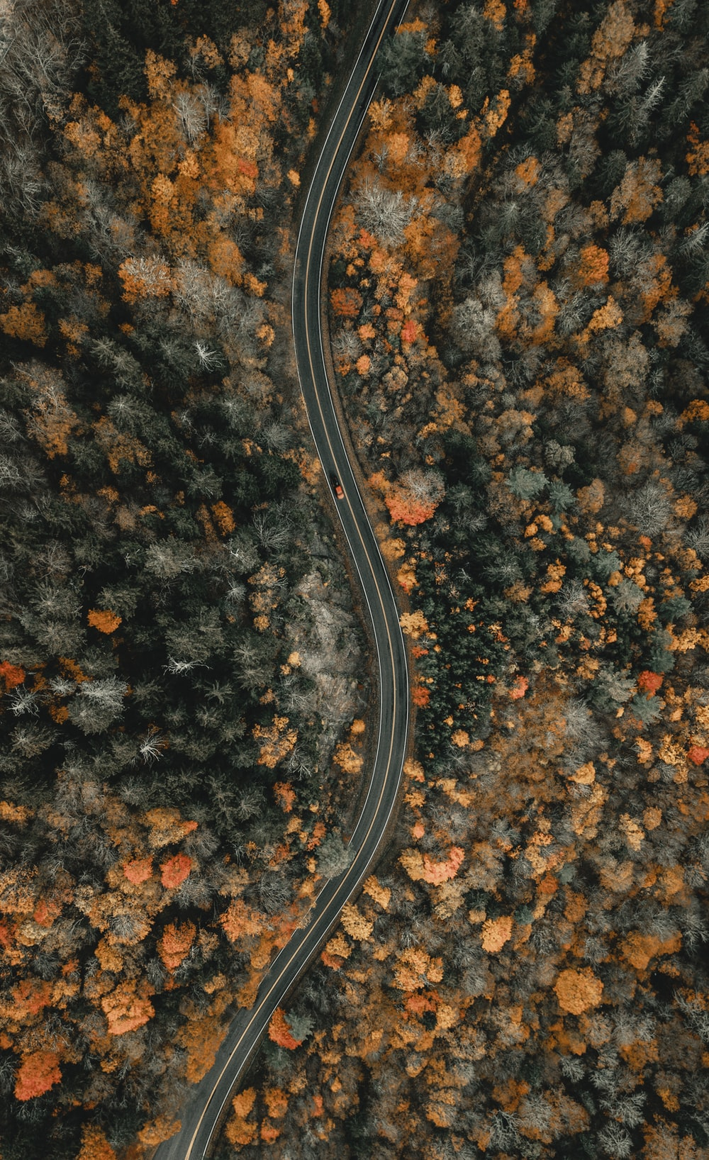 aerial view of trees during daytime