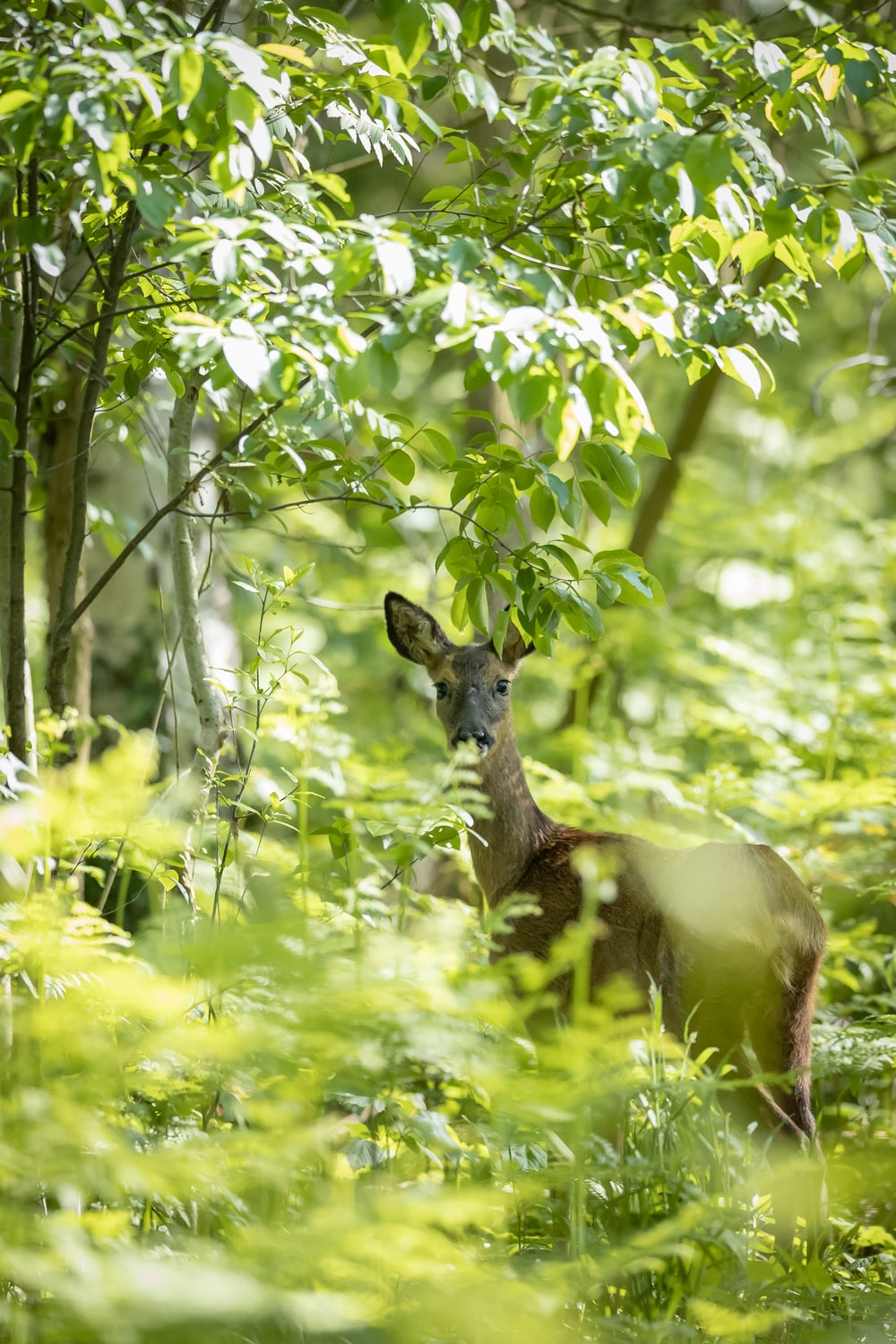 deer surrounded by trees