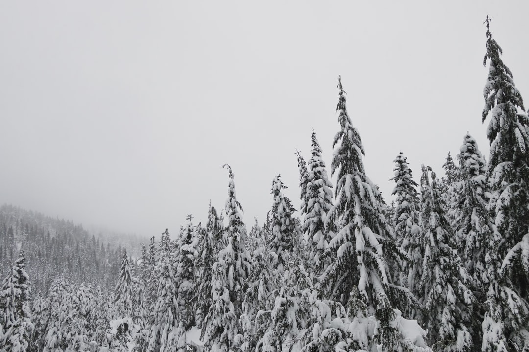 Our first snowshoeing trek of this Christmas Season. It was cold, wet, windy, and beautiful!