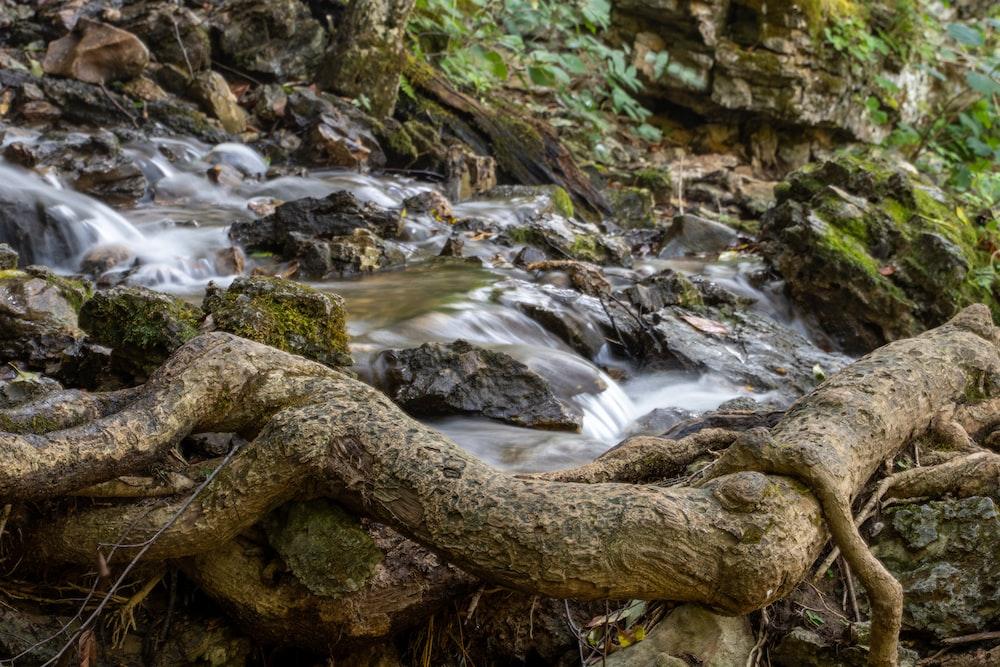 brown tree log on river