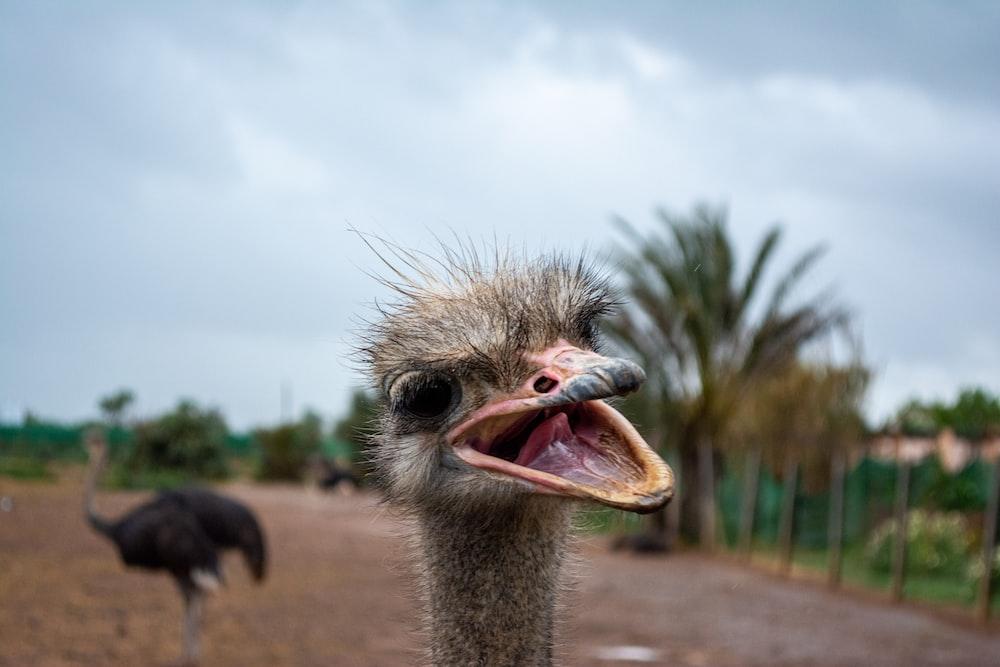 closeup photo of ostrich