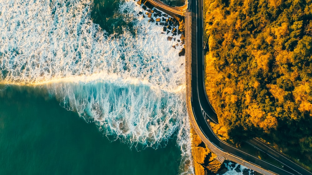 aerial view of trees near sea waves