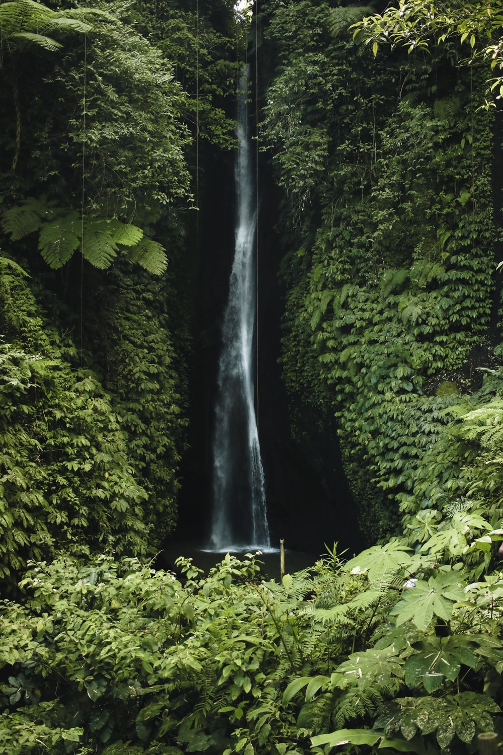 clear waterfalls surrounded by trees