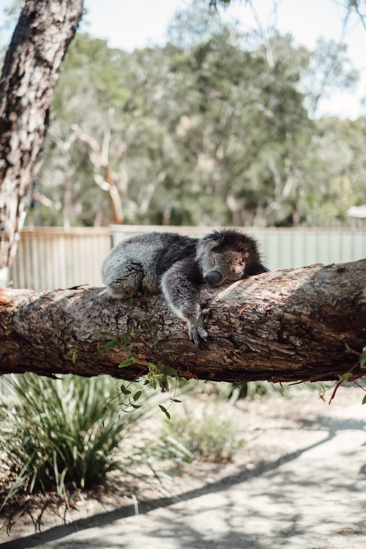 four-legged brwn anima on tree log