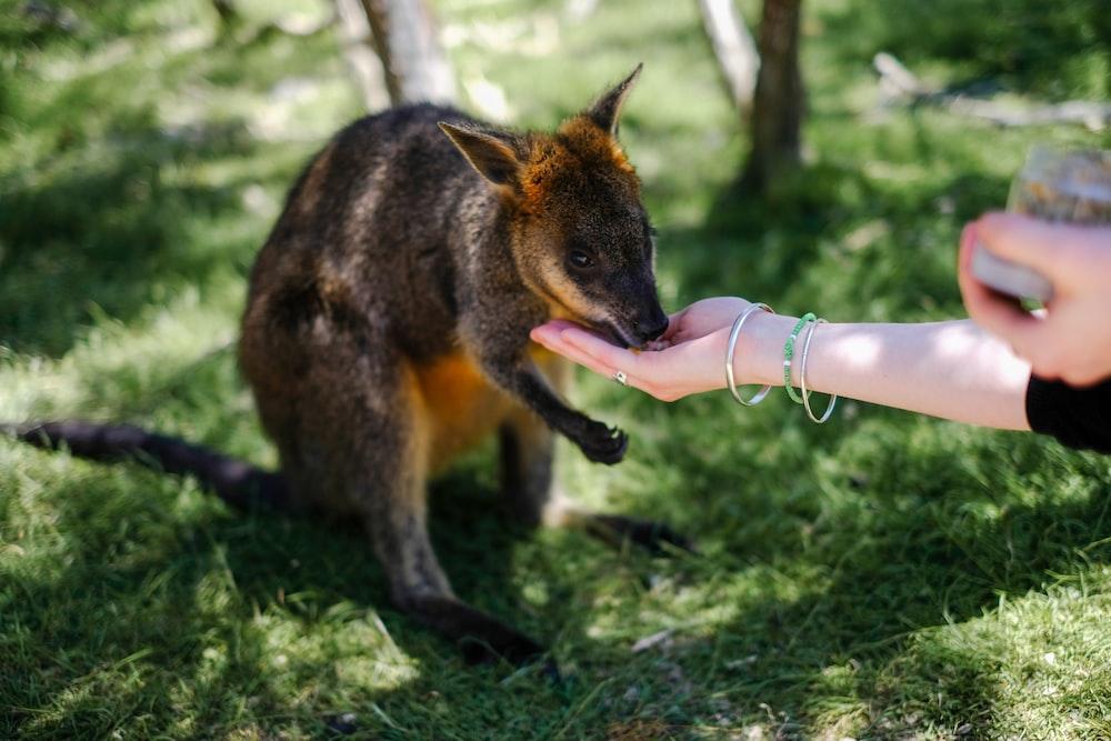 person feeding animal