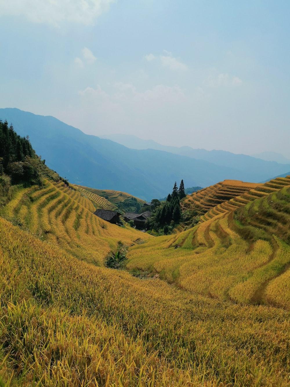 rice terraces under blue sky