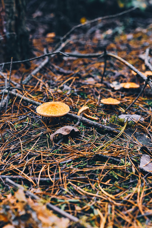 white and brown mushroom photograph