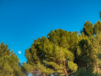 Moon rise over trees at Paraíso Festival 2019. Madrid, Spain