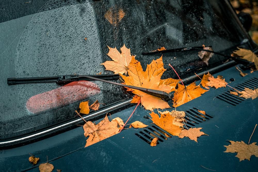 brown maple leaves on black car