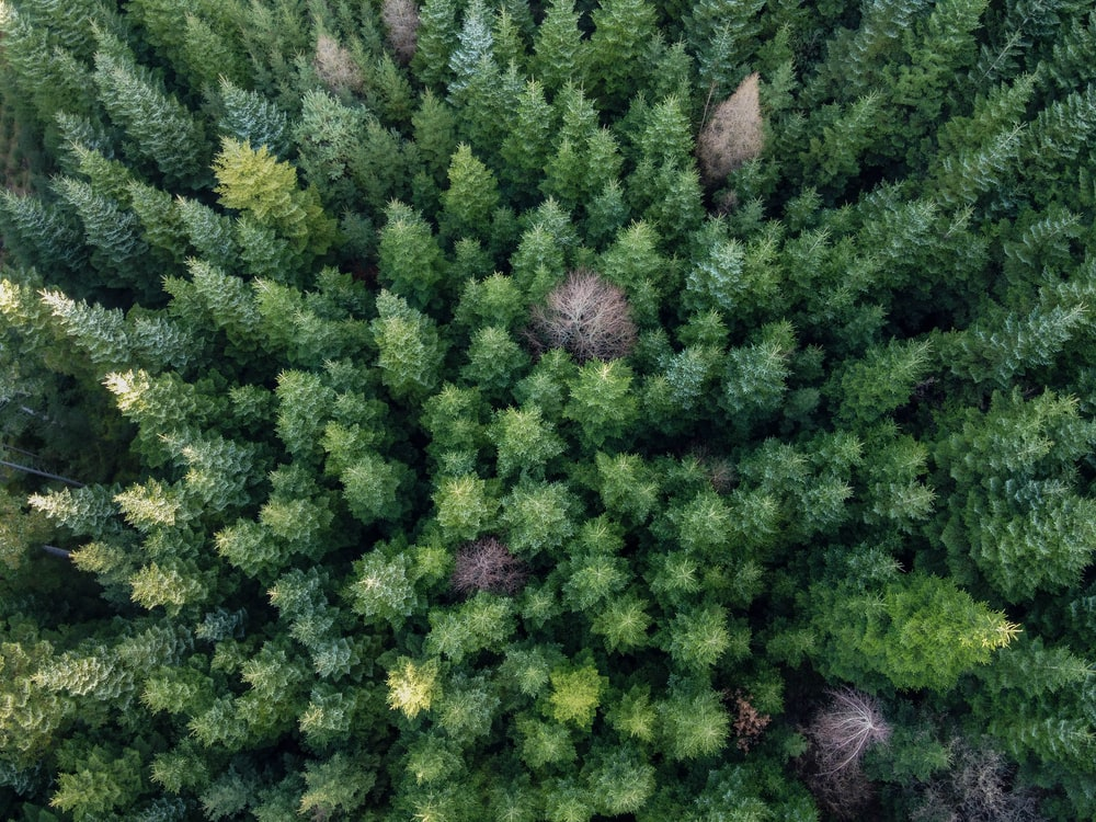 aerial photography of forest during daytime