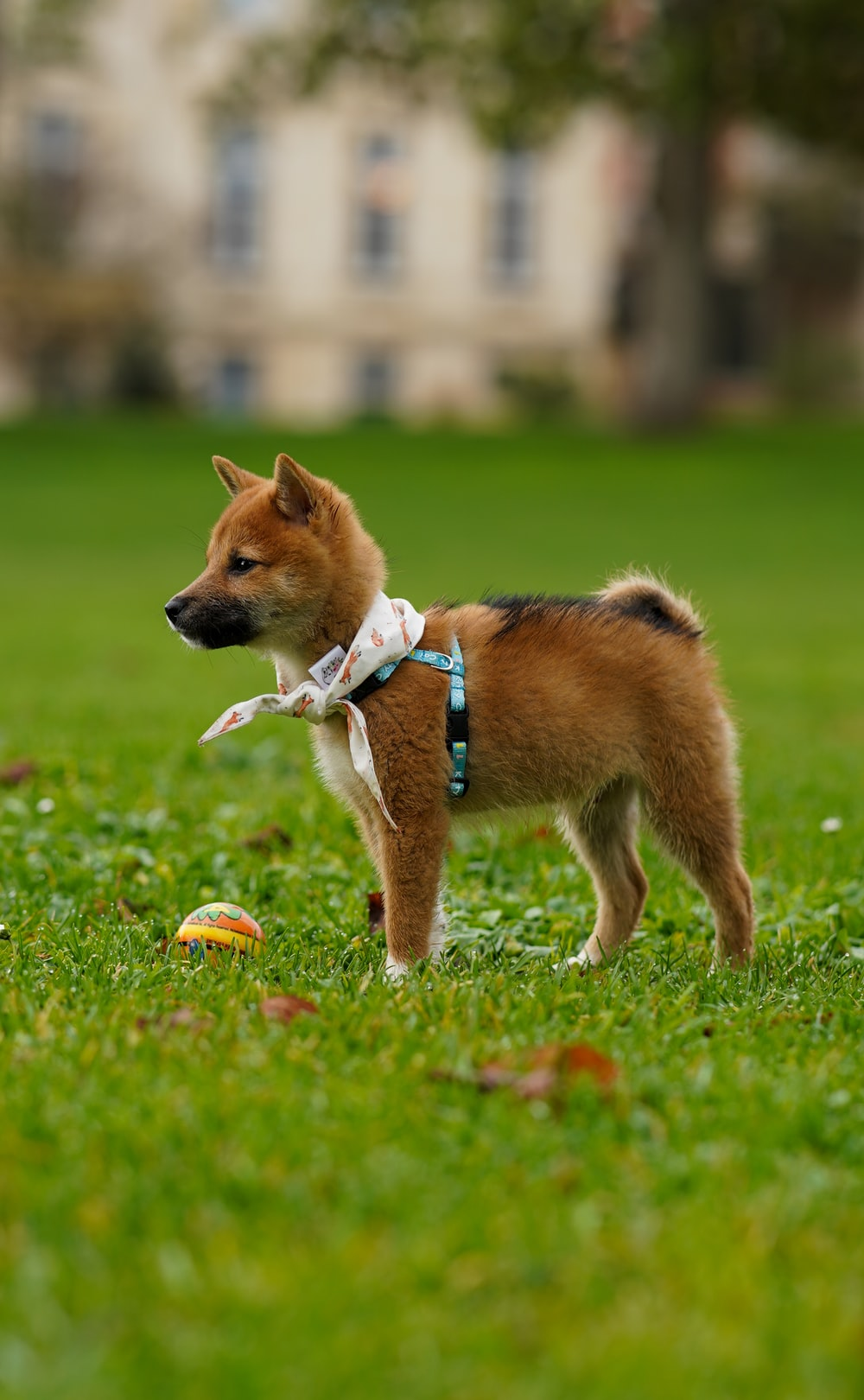short-coated brown puppy on green grass during daytime