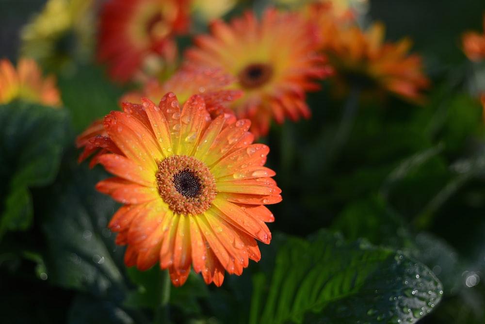 orange and yellow petaled flower