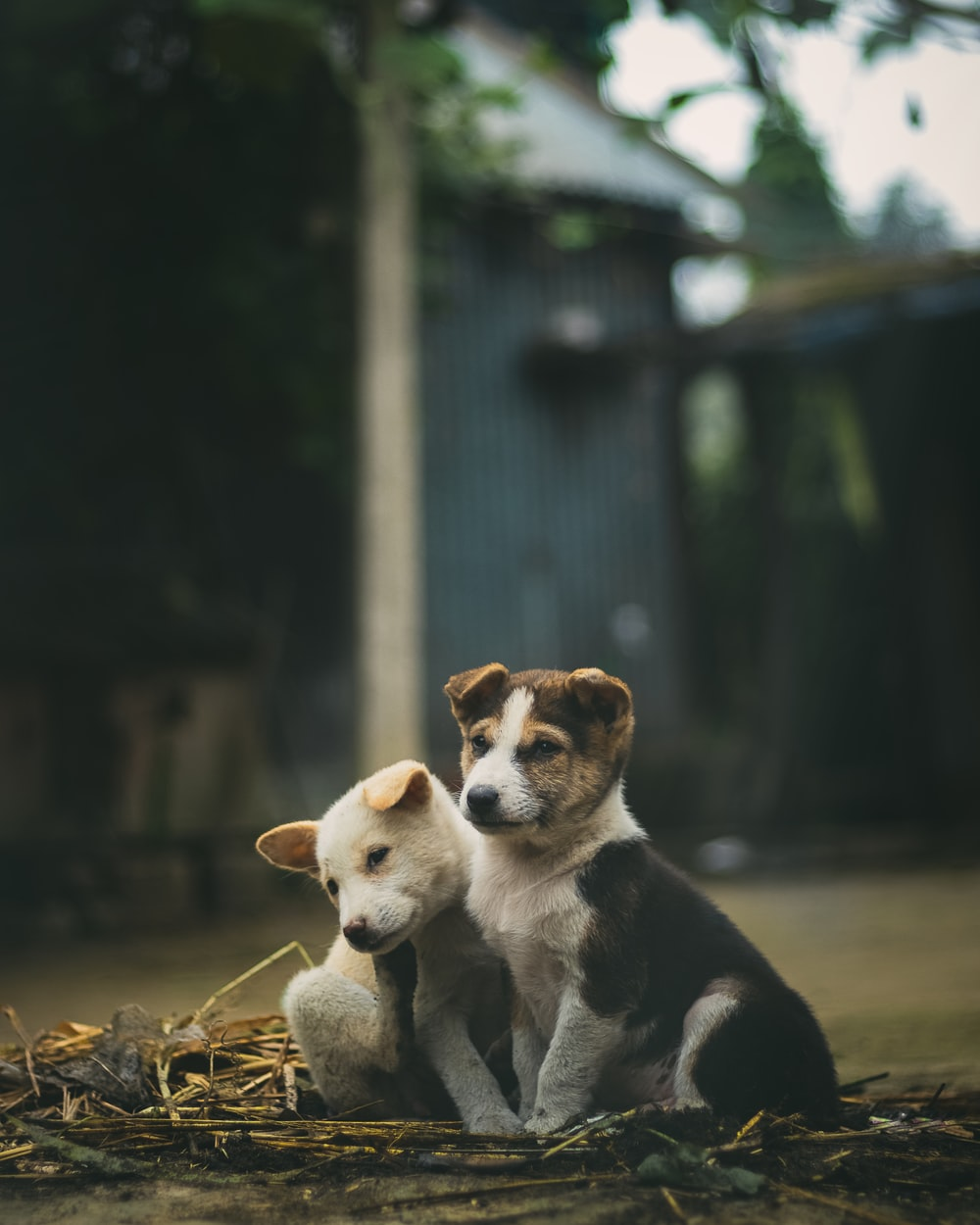 short-coated white and black puppy