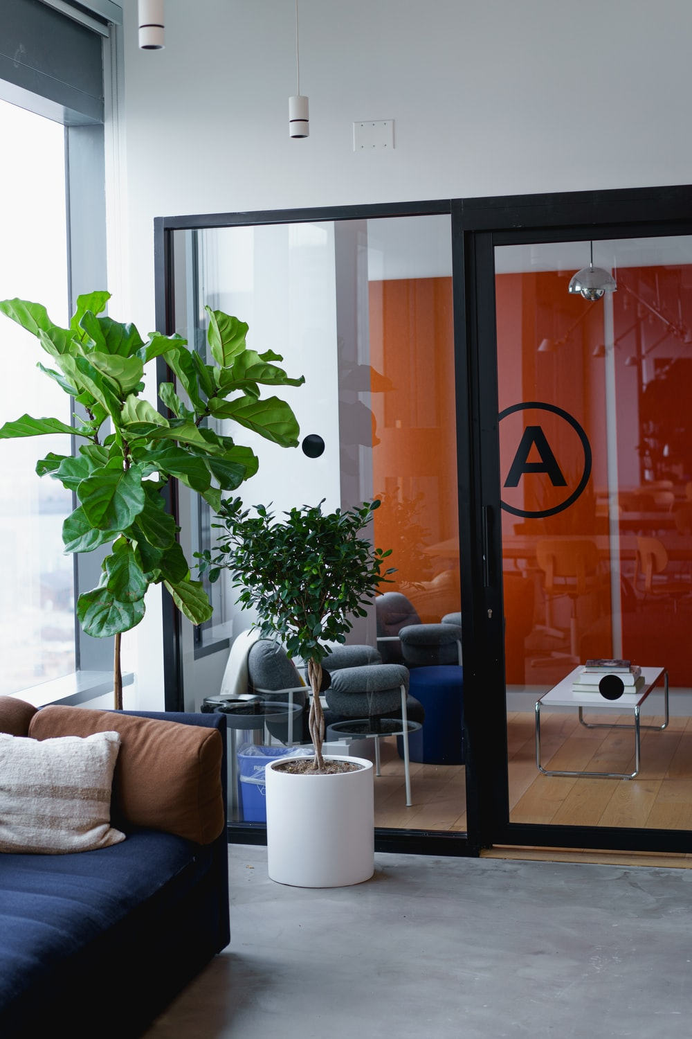 two potted indoor plants beside clear glass panel