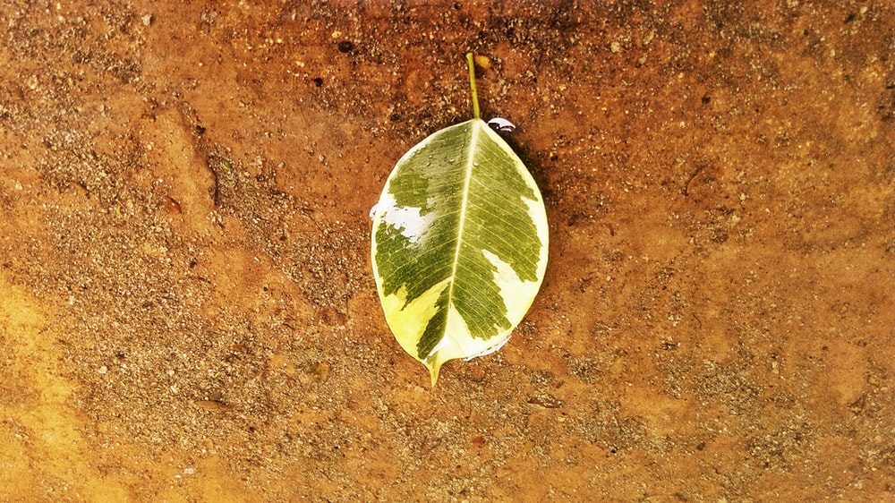green and white leaf