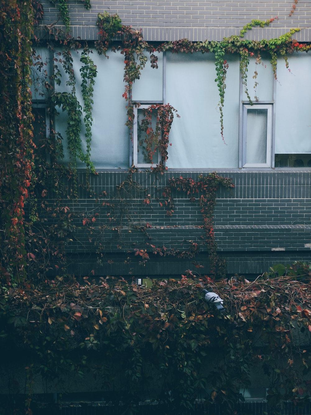 green plants on concrete house