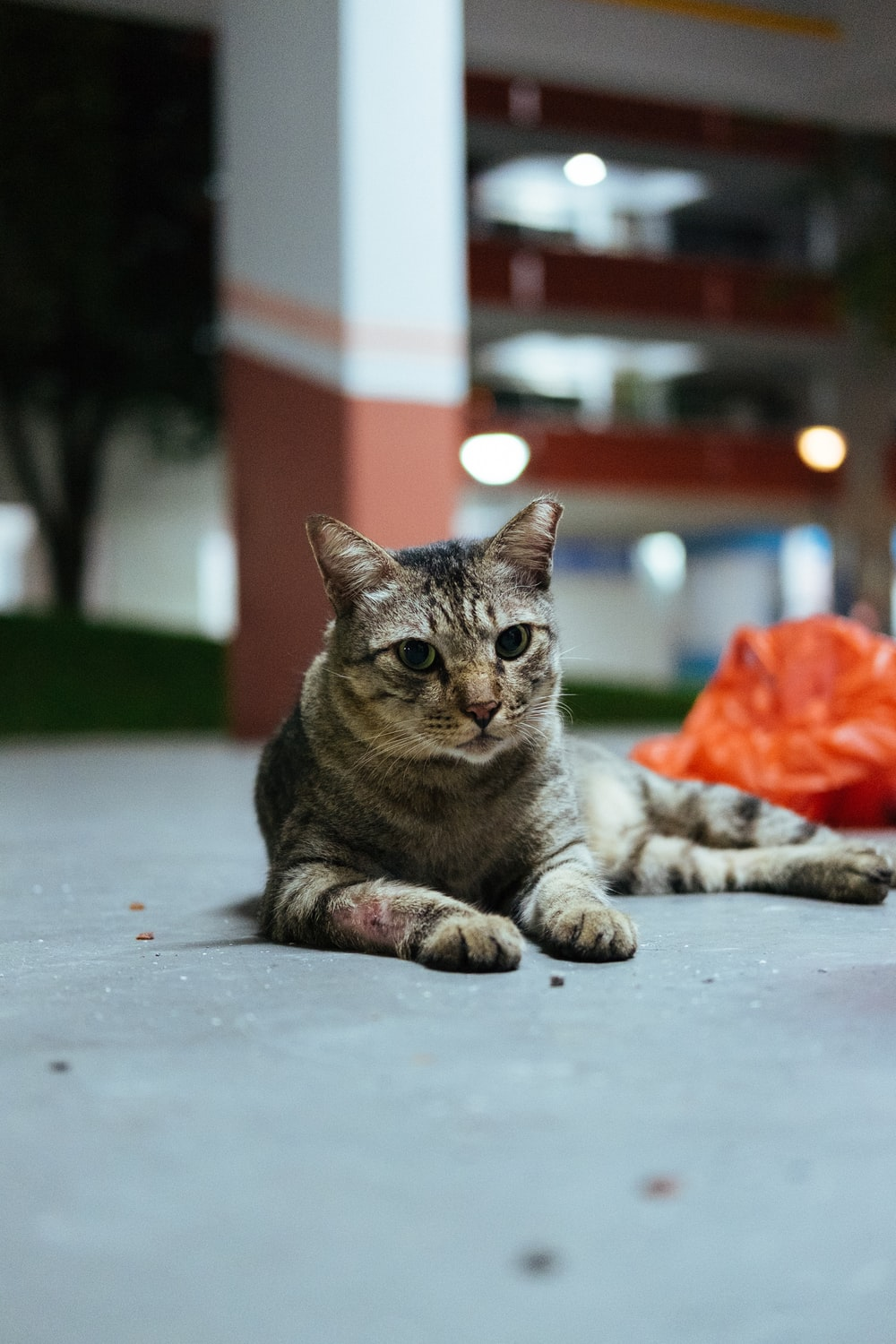 selective focus photography of gray tabby cat