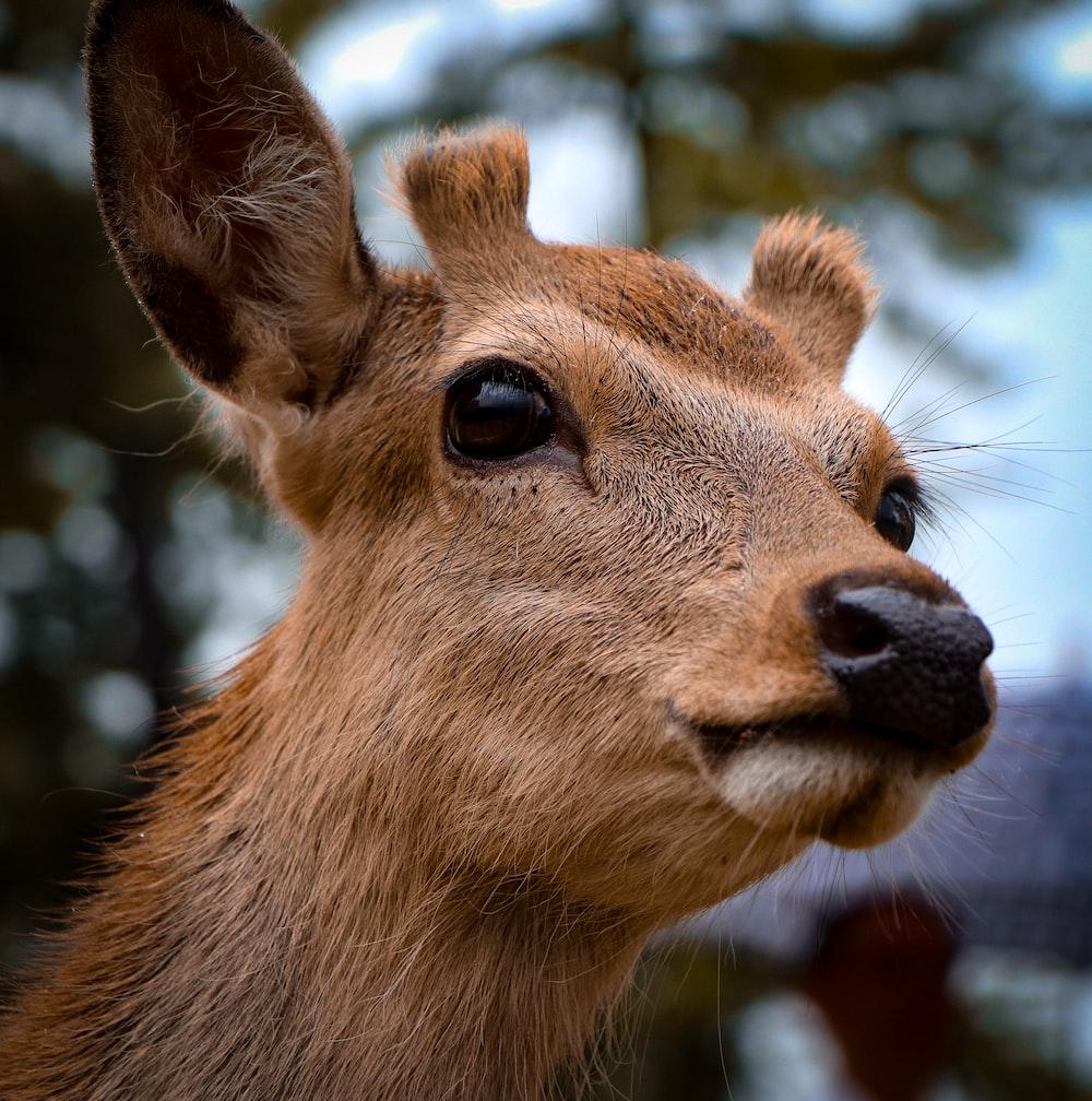 close-up of brown animal