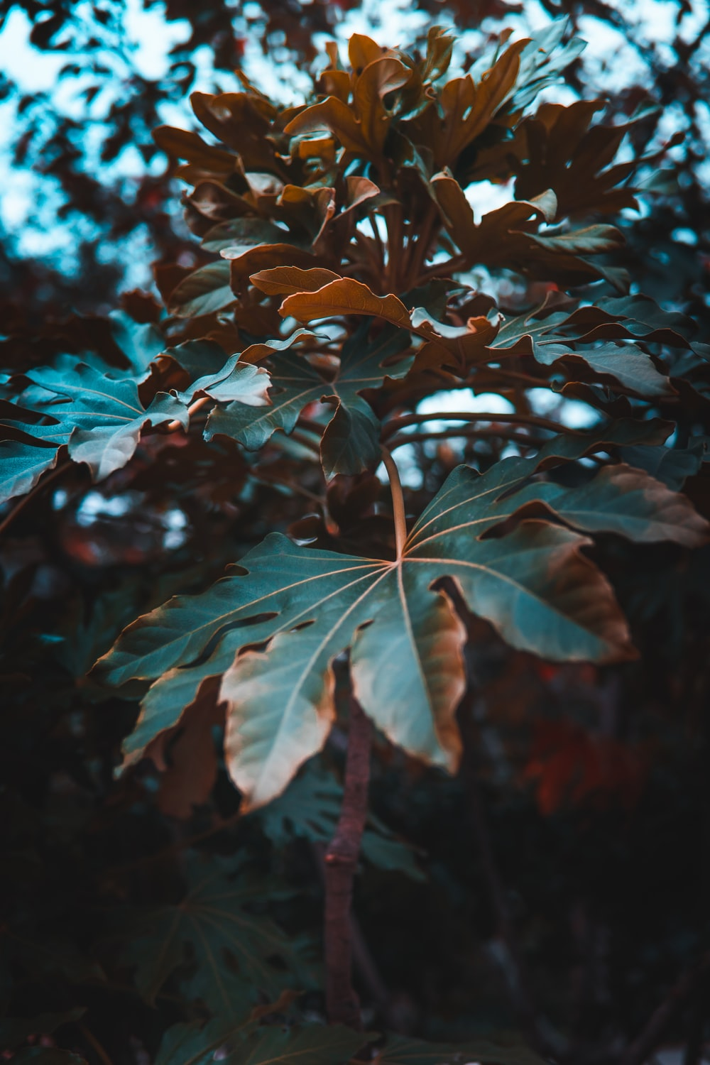 selective focus photography of green-leafed plants