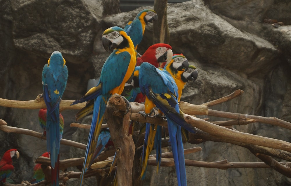 selective focus photography of macaws on tree branch