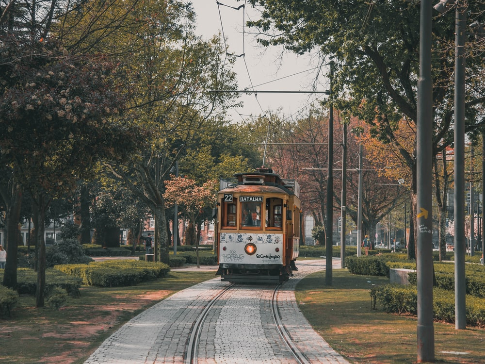 brown and white tram between trees