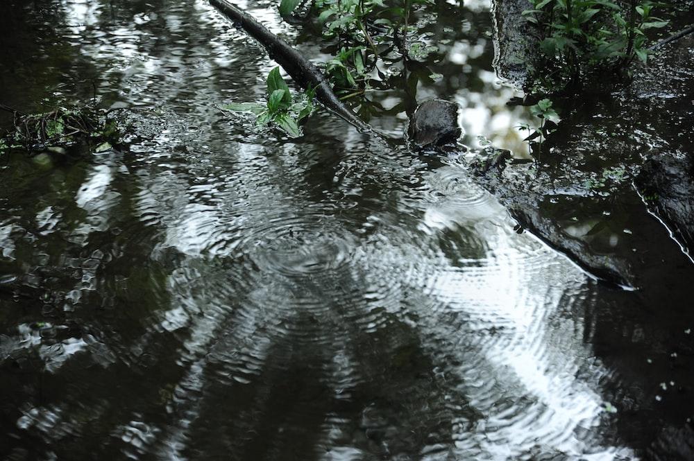 water ruffles during daytime