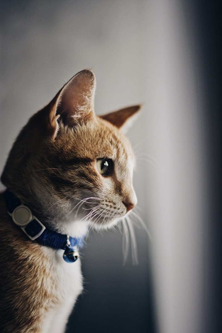 Why cats are the purrrrfect pets