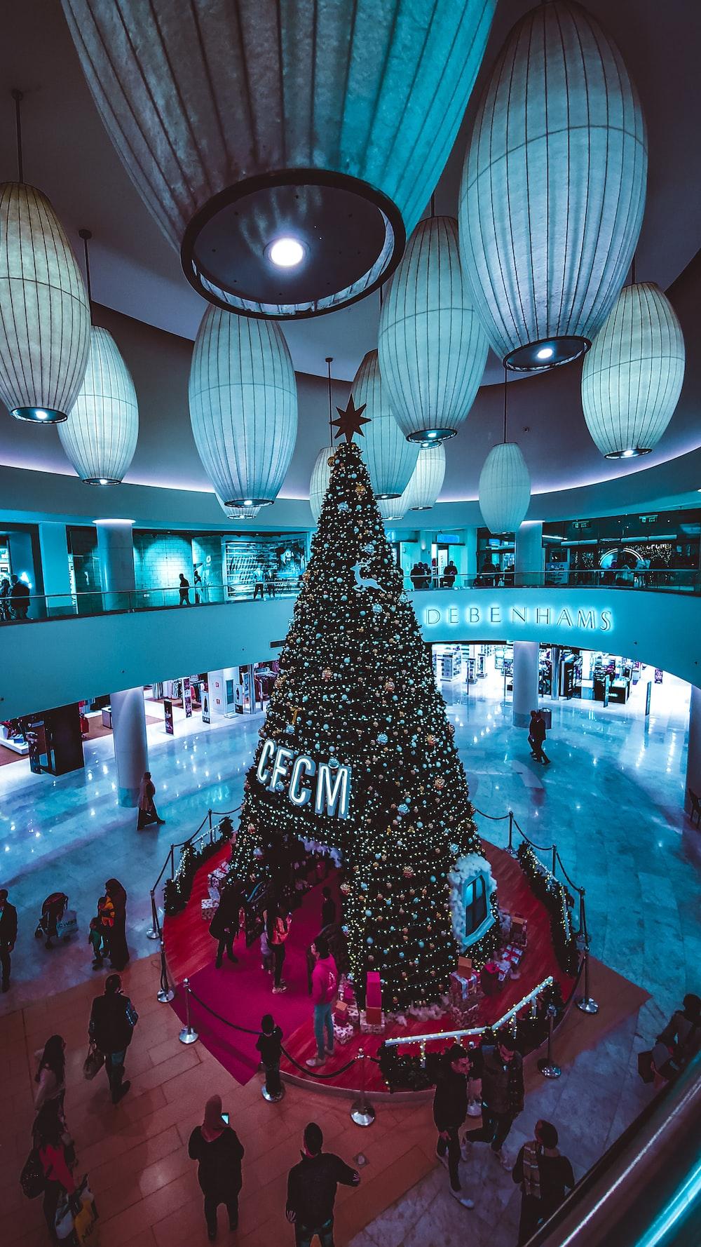 people near green holiday tree