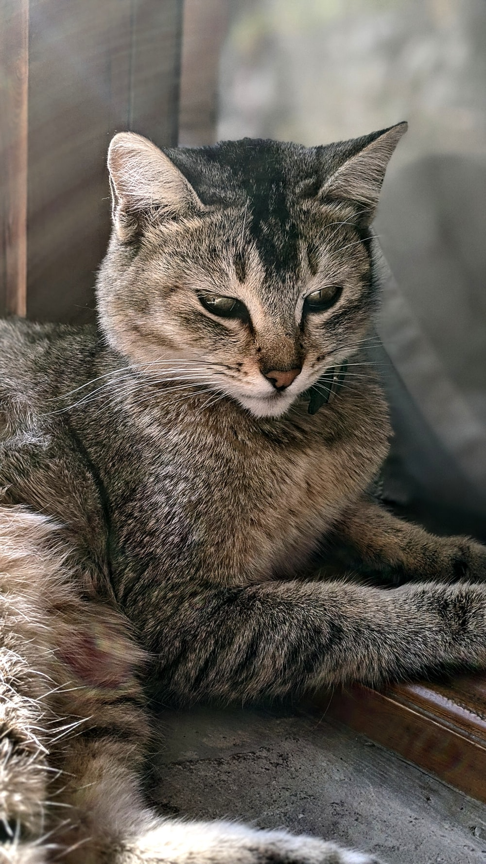 shallow focus photo of gray and brown cat