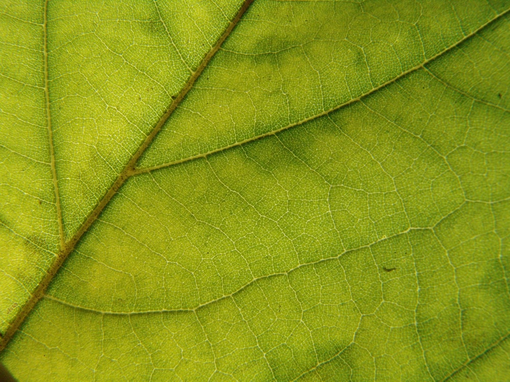 shallow focus photo of green leaf